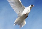 Bird of Gyeonggi-do